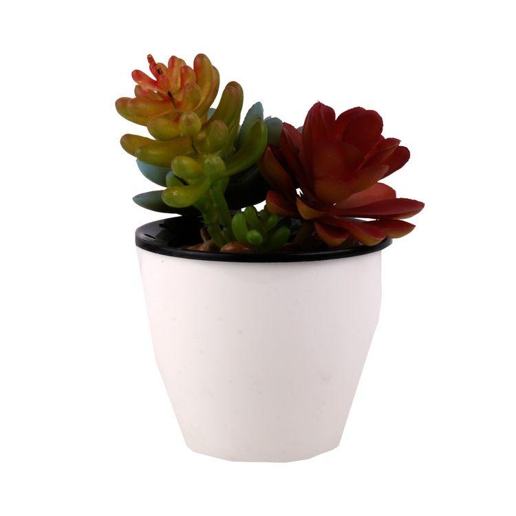 Suculenta-En-Maceta-3-Flores-1-573099