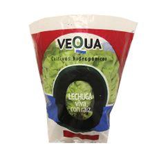 Lechuga-Francesa-Hidroponica-Vequa-1-152342