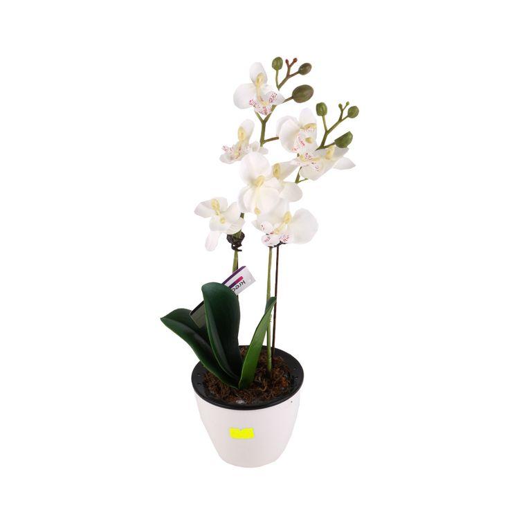 Flor-En-Maceta-De-Cemento-Phalaenopsis-1-572985