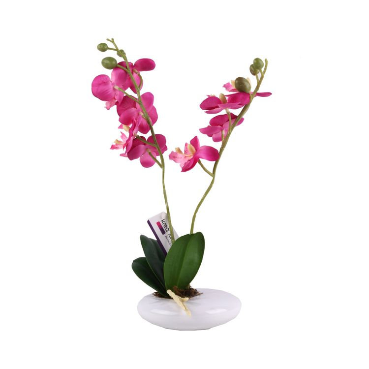 Flor-En-Maceta-Enopsis-1-573009