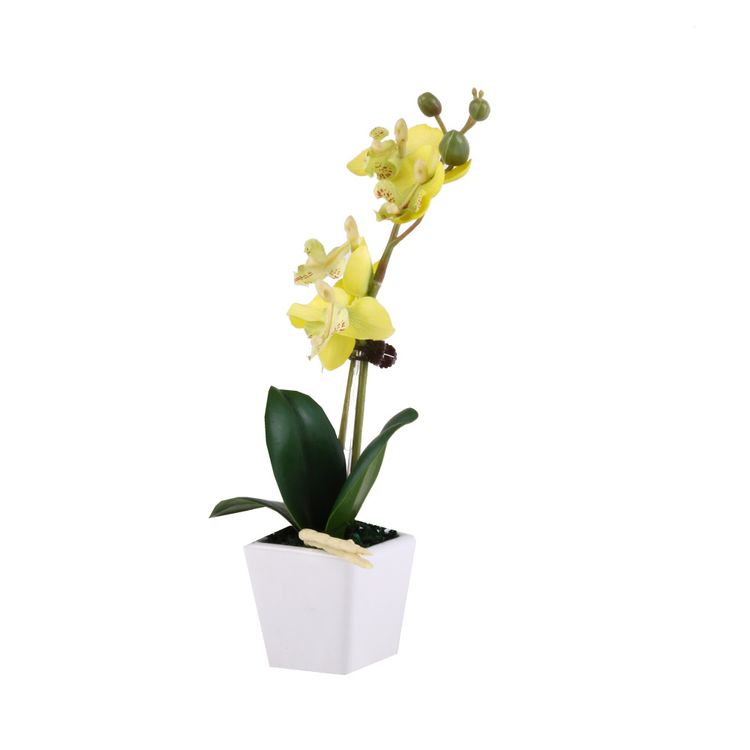 Flor-En-Maceta-Phalaenopsis-1-573082