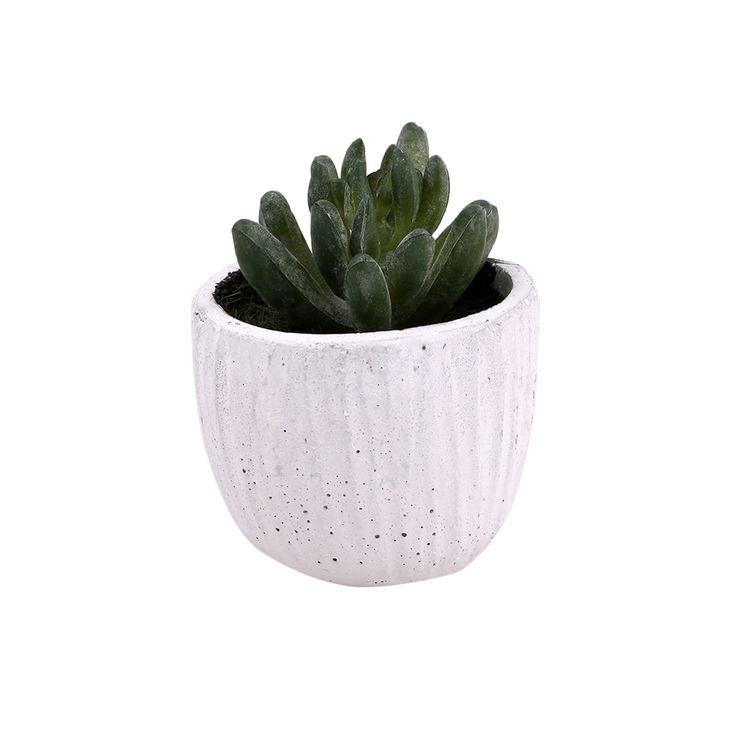 Suculenta-Pote-Cemento-1-574071