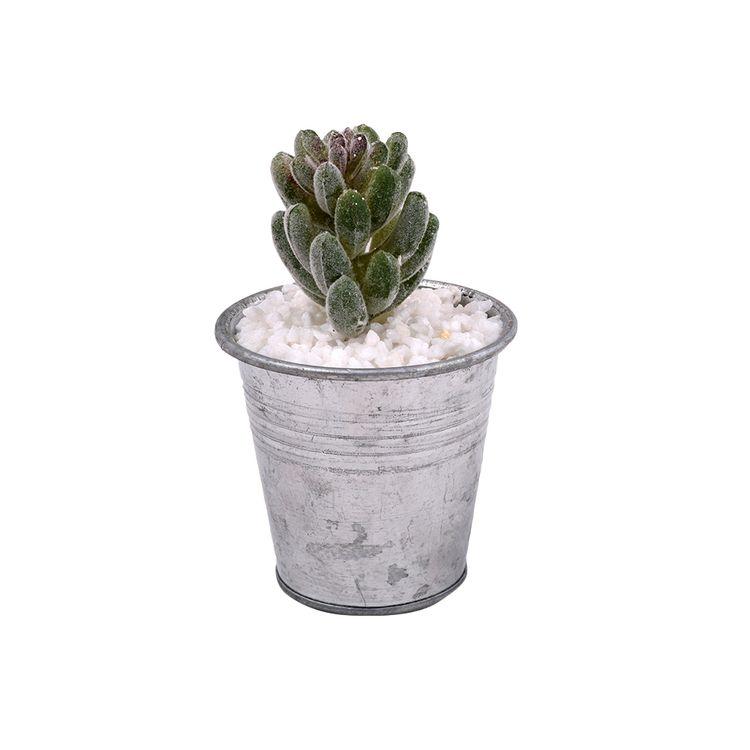 Suculenta-En-Maceta-Mini-Tropical-1-574082