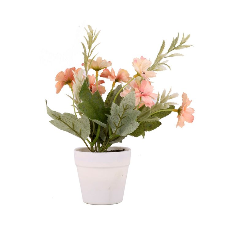 Flor-Mini-En-Maceta-1-606732