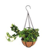 Planta-Colgante-1-606861
