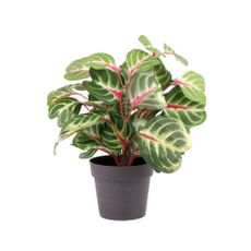 Planta-En-Maceta-Mini-Con-Color-1-606872