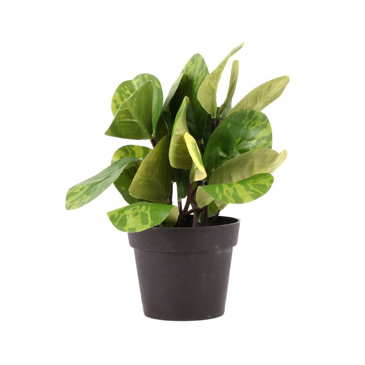 Planta-En-Maceta-Mini-1-606895