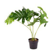 Planta-En-Maceta-Mostera-1-606950