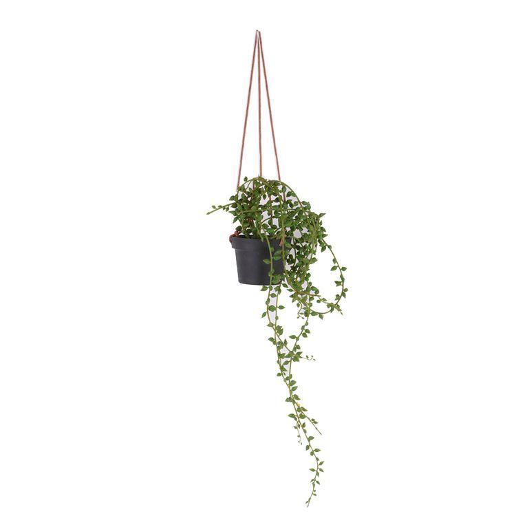 Planta-Colgante-1-606957