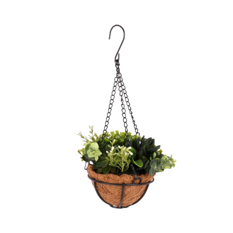 Planta-Colgante-En-Maceta-Herbario-1-606960