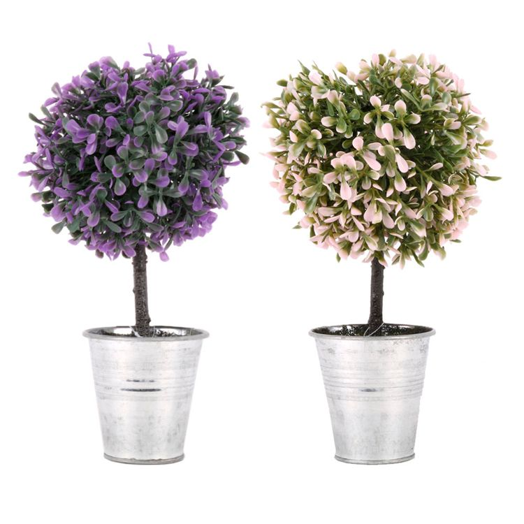 Planta-En-Maceta-2c-Anais-1-606961