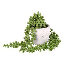 Planta-Colgante-De-Bolitas-1-606963