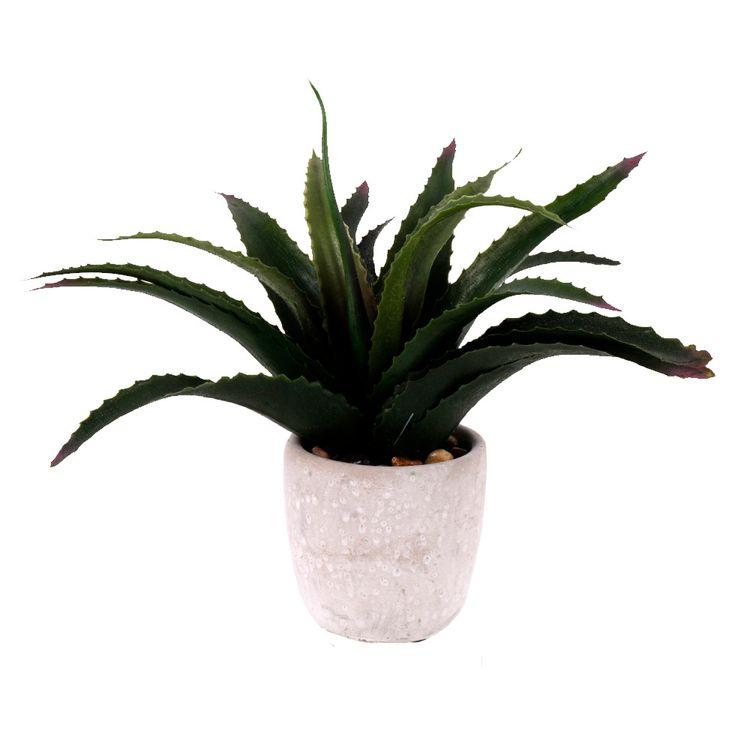 Planta-Tropical-En-Maceta-Herbario-1-606743