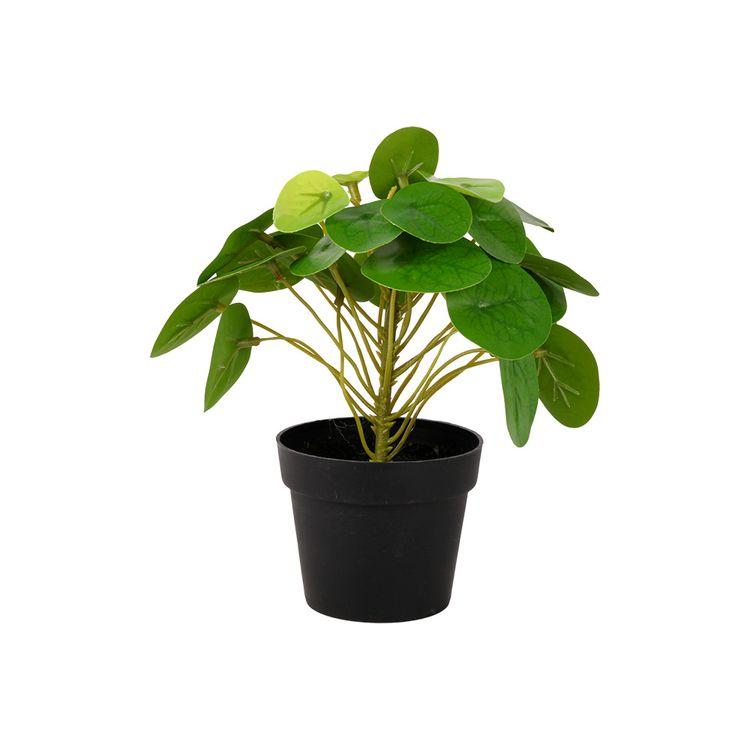Planta-En-Maceta-1-773740