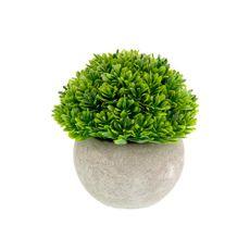 Planta-En-Maceta-Hojas-Verdes-12cm-1-854053