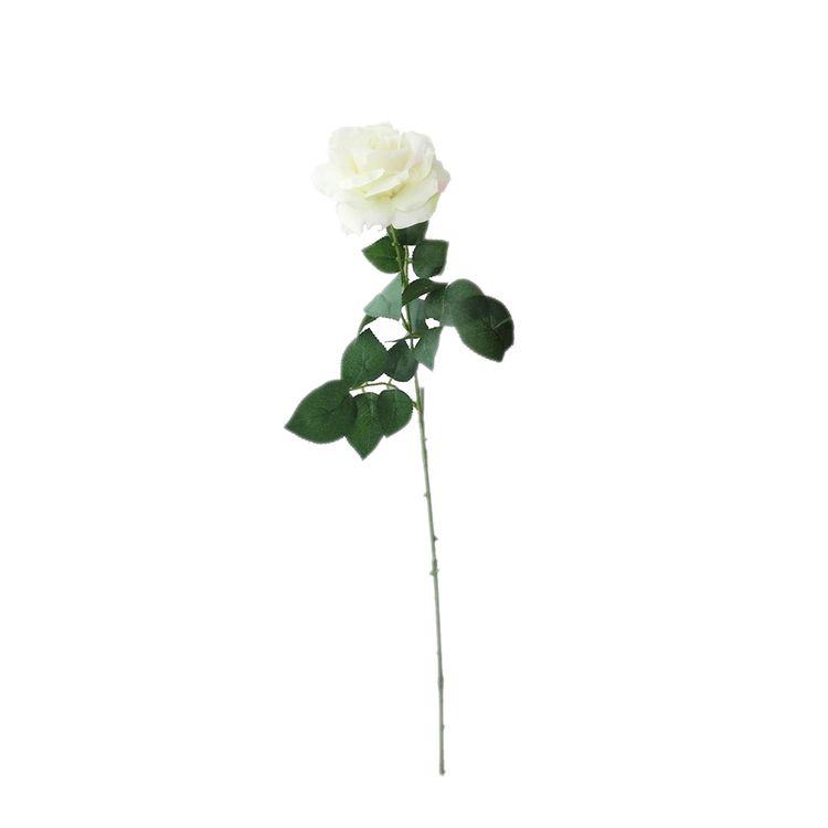 Rosa-Unitaria-Tl-72-5-Cm-Pv18-X-1u-1-572751