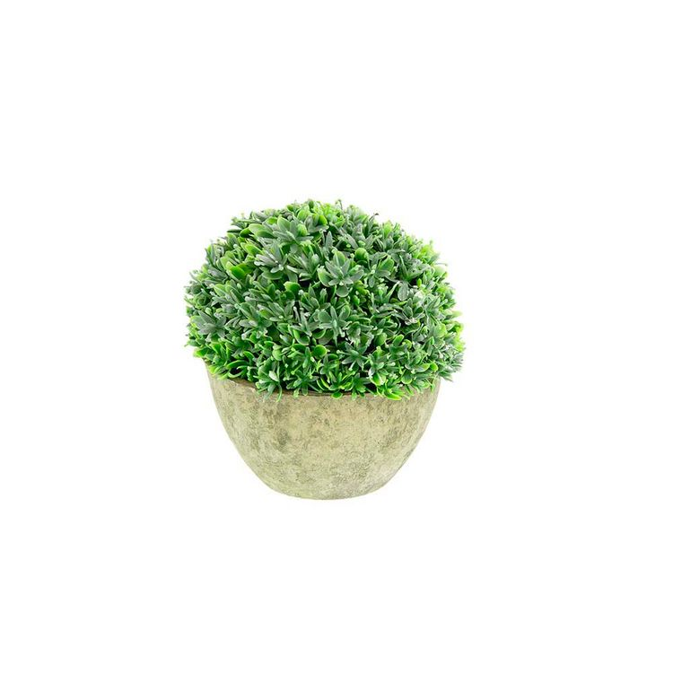 Planta-En-Maceta-Rocio-Oscuro-B-12cm-S-m-1-869656