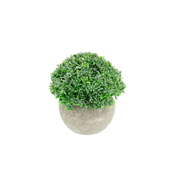 Planta-En-Maceta-Rocio-Oscuro-A-12cm-S-m-1-869658