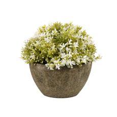 Planta-En-Maceta-Flores-Blanca-B12cm-s-m-1-869655